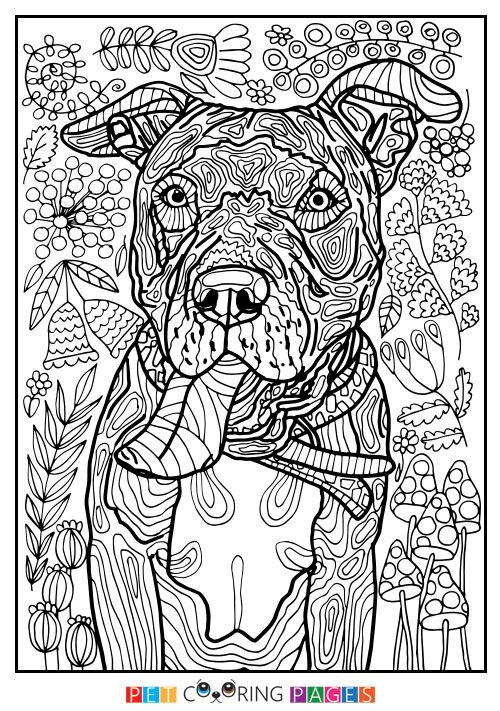 "Free printable American Pit Bull Terrier coloring page ""Tank"" available for download. Simple and detailed versions for adults and kids."