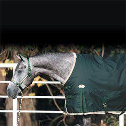 Big D Sterling Medium Turnout Blanket - Forest Green by Big D Products. $129.95