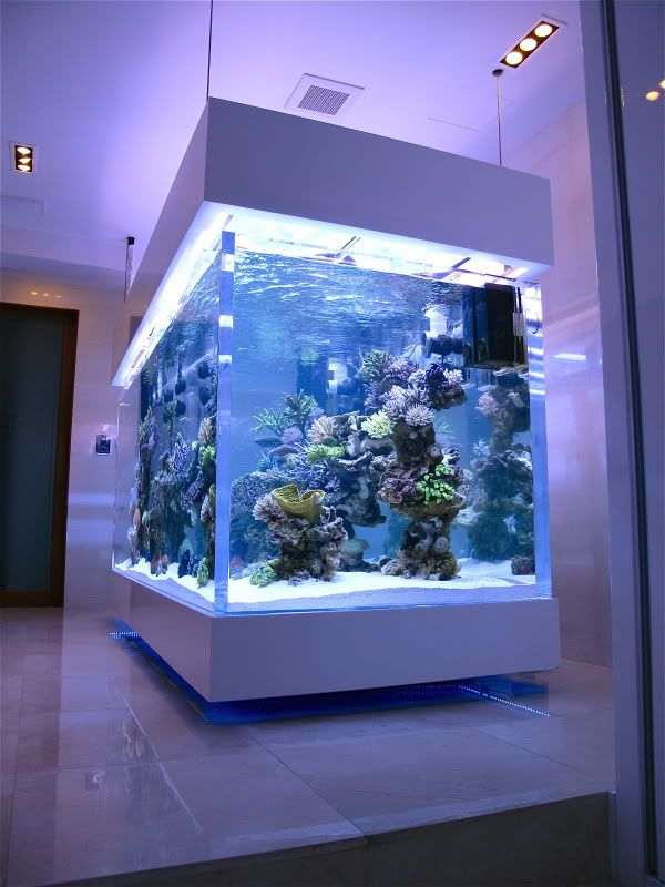 Best Saltwater Fishtank Images On Pinterest Aquarium Ideas - Acrylic aquariumfish tank clear round coffee table with acrylic