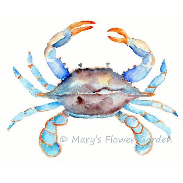 Blue Crab Watercolor-Crab Art Sea Life Art Beach House Decor Crab... ($9) ❤ liked on Polyvore featuring home, home decor, wall art, home & living, home décor, wall décor, white, photo painting, white paintings and white wall art