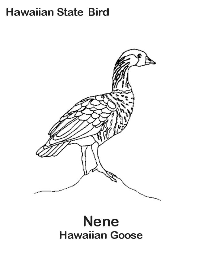 Hawaii State Bird Coloring Page