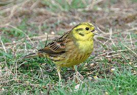 GWCT bird count to begin | Shooting times