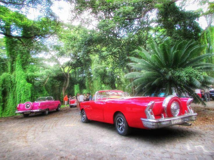 #bosque #habana #oldcar #clasicos #contrastes #lahabana #lahavana #cuba #havana #autos #carros #bosquehabana by vida_diva