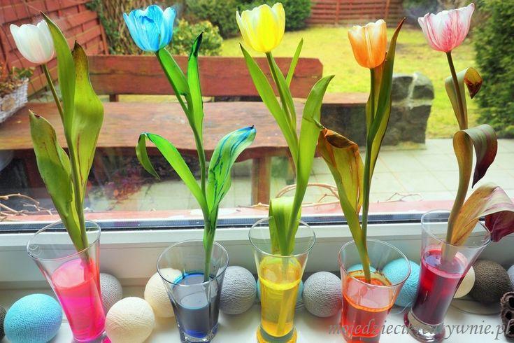 Jak zabarwić kwiaty - eksperyment
