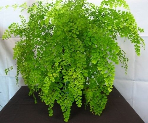 15 must see low light plants pins house plants indoor house plants and indoor plants low light - Low light indoor plant ...