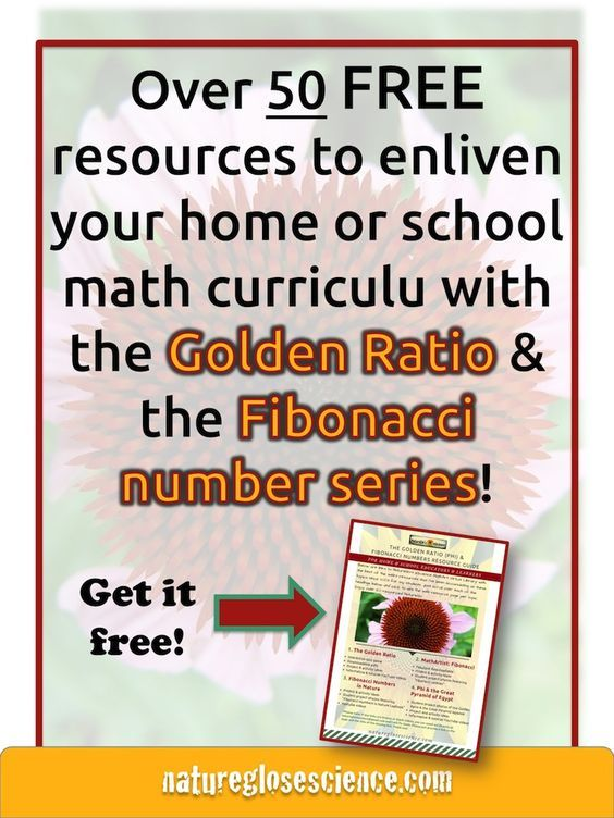The Golden ratio, Fibonacci sequence in math, Fibonacci for kids, Fibonacci activities for kids, phi math, phi in math, what is phi in math, Fibonacci sequence formula, what is the fibonacci sequence, maths in nature, examples of math in nature, math found in nature, mathematics in nature examples, nature mathematics, fibonacci for kids