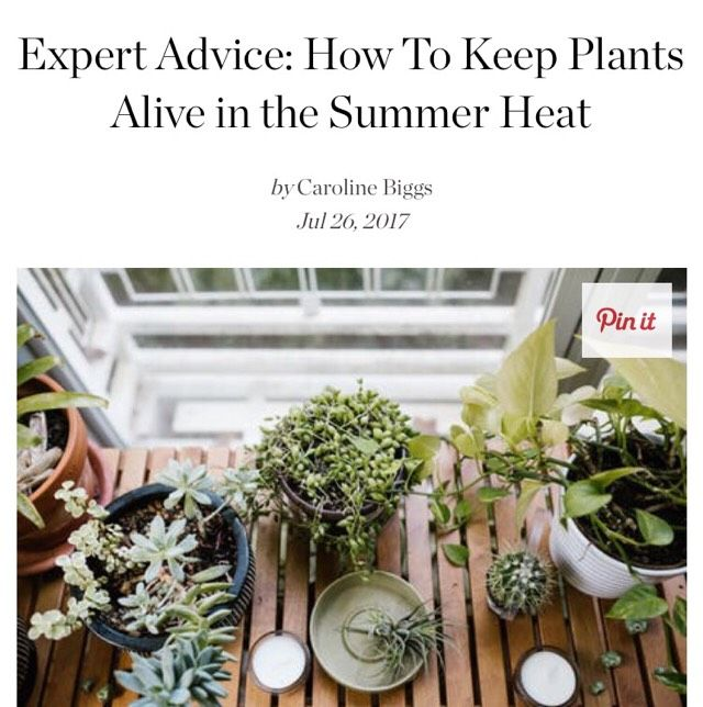 296 best home sweet home images on pinterest apartment therapy organization and organizing - Heat tolerant plants keeping gardens alive ...