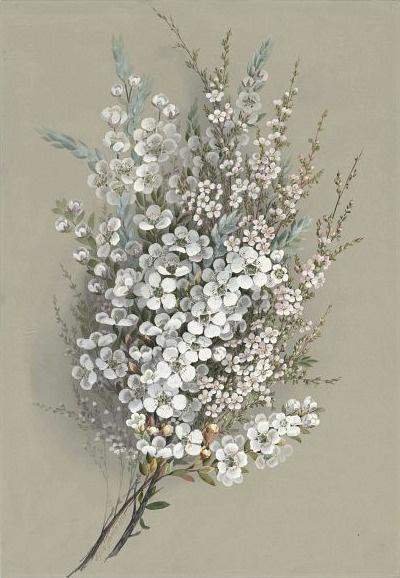 i want this bouquet for me. Ellis Rowan    Leptospermum Ianigerum    19th century