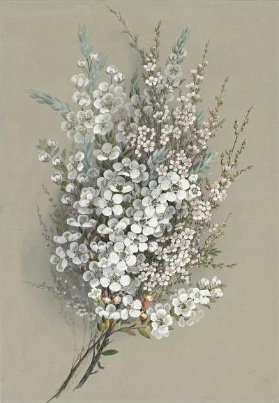 i want this bouquet for me. Ellis Rowan    Leptospermum Ianigerum    19th century