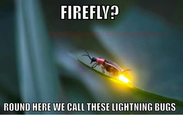 Growing up in WI we call them Fire Flies, but southern states say Lightening Bugs