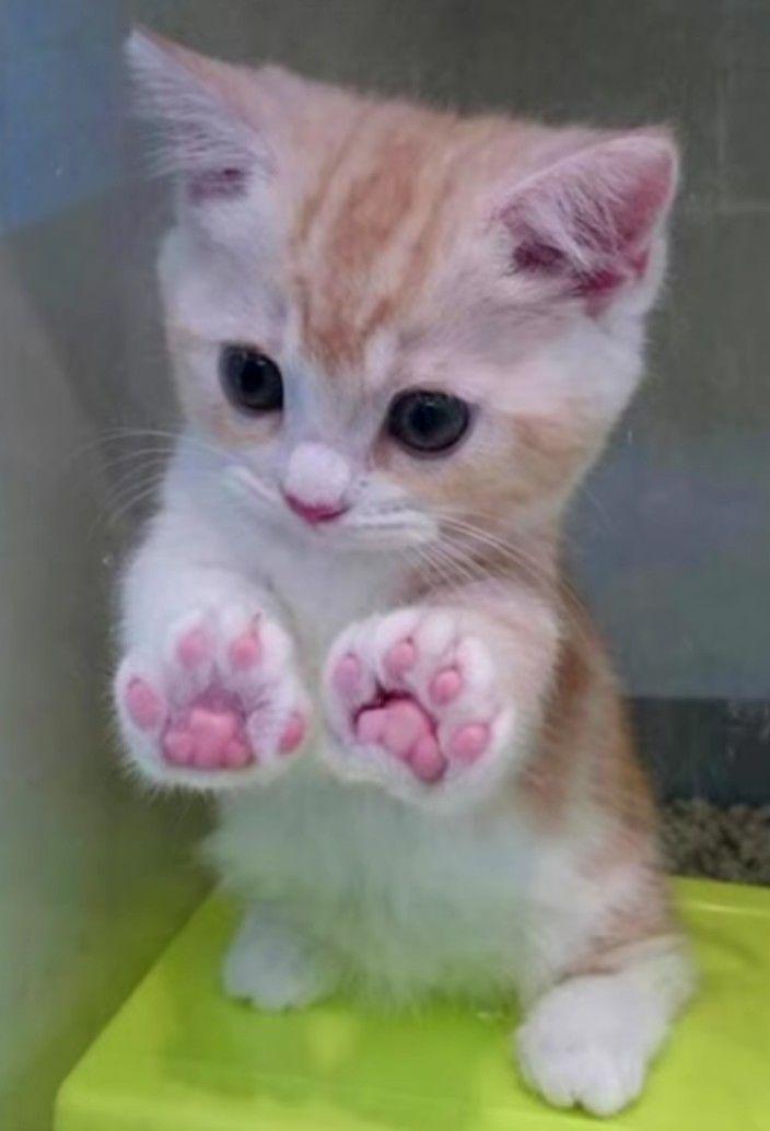 Oh du meine Güte, ich bin sprachlos !!!! 😍😍😍   – Liberty loves kitties