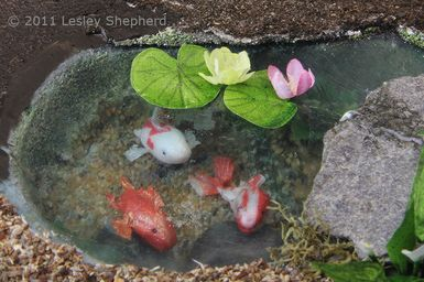 Water lilies sit on the faux water surface of a dollhouse koi pond made from sheet styrene. - Photo © 2011 Lesley Shepherd