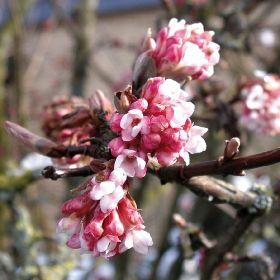 25+ Best Ideas About Schneeball Pflanze On Pinterest | Schneeball ... Pflanzen Garten Im Winter