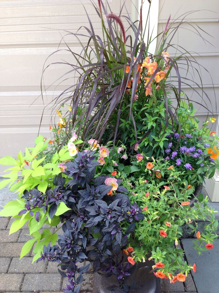 Fall Urn One Grass And Pepper Plant Two Pansy Potato