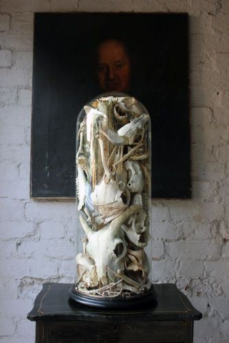 Antique Unique Skull & Skeletal Fragment Sculpture in a Victorian Glass Dome