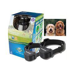 anti fugue sans fil pour 2 chiens