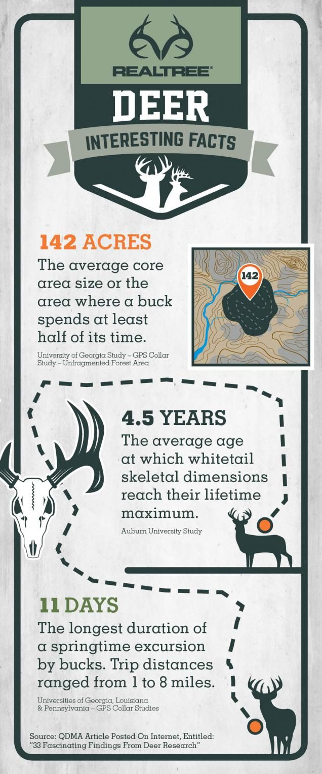 Traveling Habits and Potential   #Realtreeinfographics