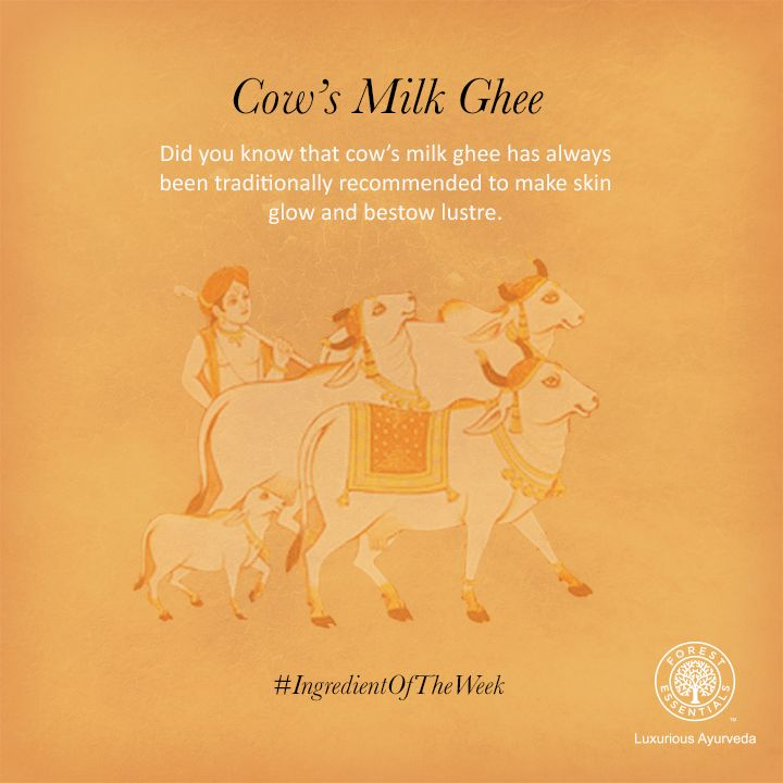 According to ancient Ayurveda, cow ghee is full of essential nutrients!