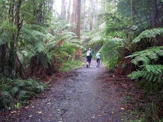 Sherbrooke Forest Walking trail, near Ferntree Gully and Mount Dandenong, Victoria