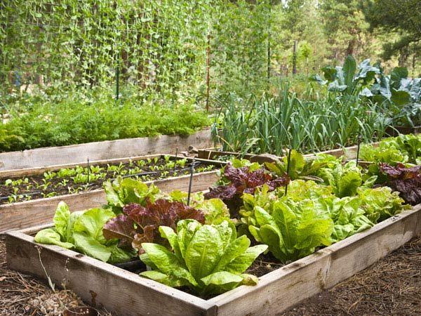 24 best potentilla varieties images on pinterest perennials flower power and flowers garden - Plant vegetable garden friends foes ...