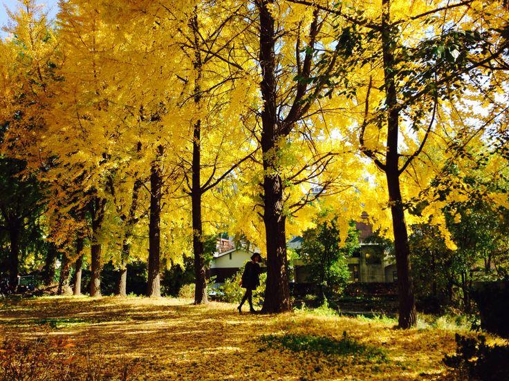 Lovely autumn of Seoul.