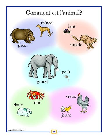 French Opposites Poster - Italian, French and Spanish Language Teaching Posters | Second Story Press