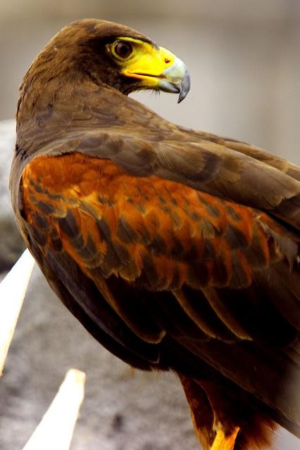 occhio di falco by alberto cmos, via Flickr