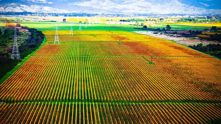 Picturesque panoramic views of the autum colours of a Winery near Blenheim, South Island, New Zealand. ~