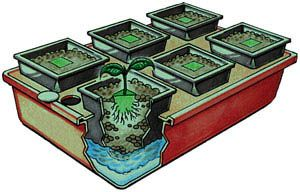 Emily's Garden Hydroponic  Only $82.50  Awesome closet grow hydro unit with lights from ▼   http://CFL-Growlight.com