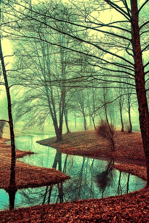 Into the wildy dream ~ By Osvaldo Mirante makes me think of Cabeswater