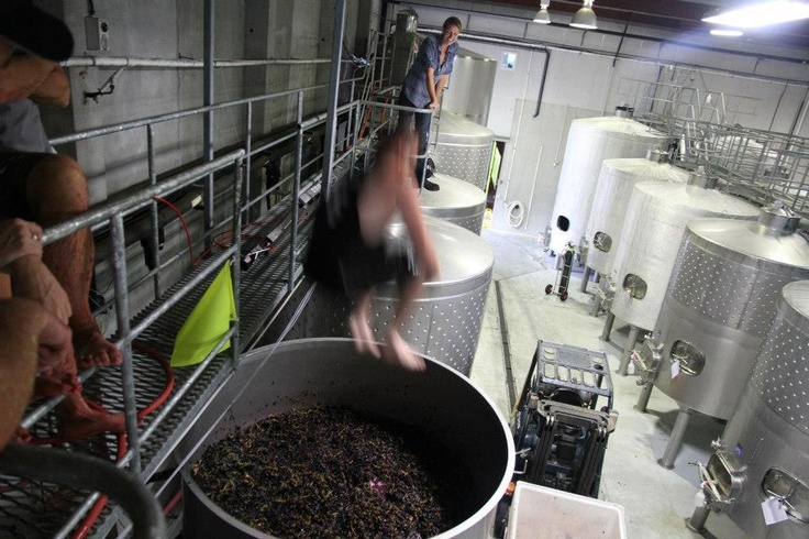 Trinity Hill winery Hawkes Bay has a flying plunger! #VinAntics