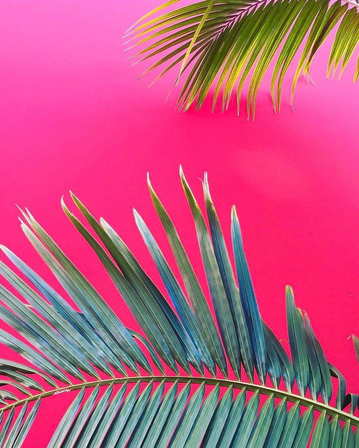 Pink + palms x @bethanylud