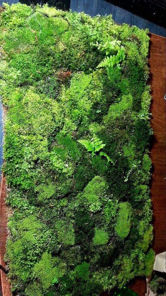 Bring the beauty of nature into your home with our Live Moss Bath Mat! This mat lives off of the steam from the bathroom and water drippings from stepping out of the shower. A unique fun way to dry your feet and impress your guests