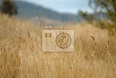 Suchy jesienny łąka na obrazach Redro. Najlepszej jakości fototapety, naklejki, obrazy, plakaty, poduszki. Chcesz ozdobić swój dom? Tylko z Redro