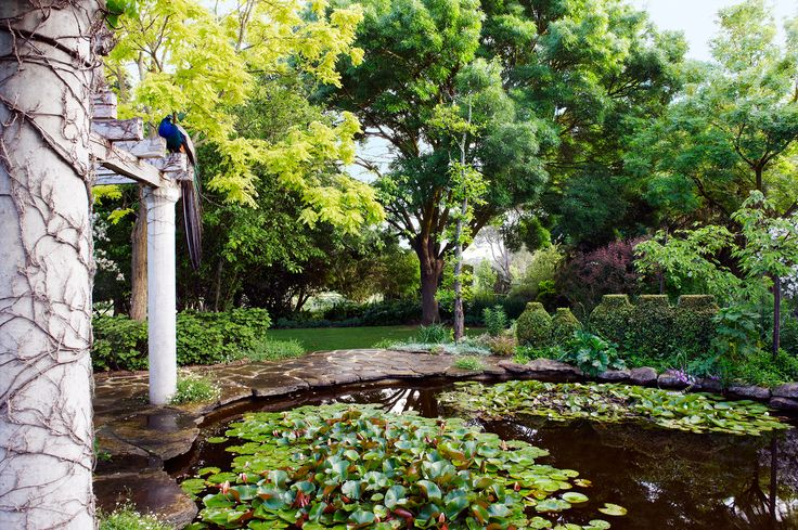 A lily pond overlooked by a peacock, in a country garden on the outskirts of the Barossa Valley. Photography: Brigid Arnott | Story: Australian House & Garden