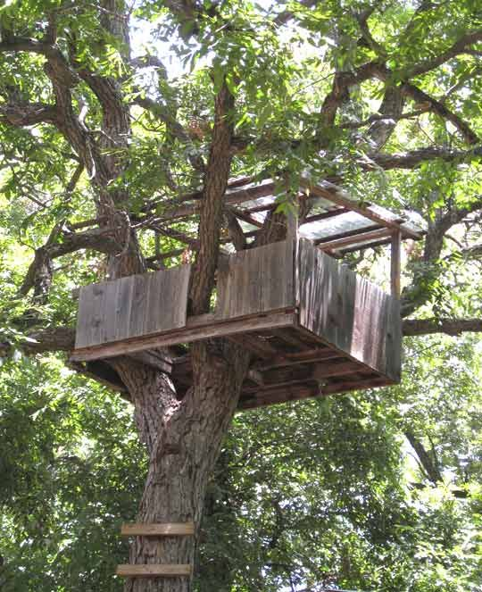 Tree House Plans For One Tree