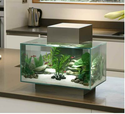 6 Gallon Pewter Edge Aquarium By Hagen Fluval | Nice ...