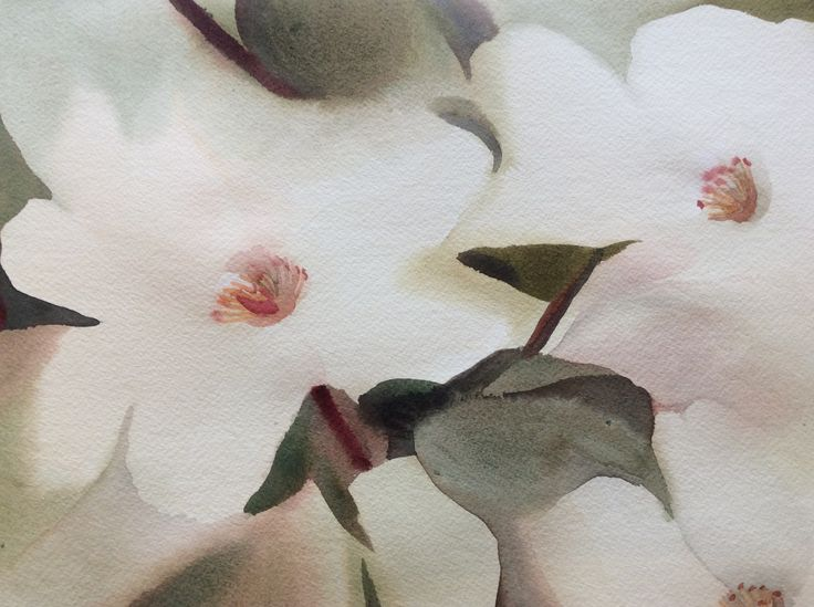 Particolare di acquerello di Elisabetta Marini