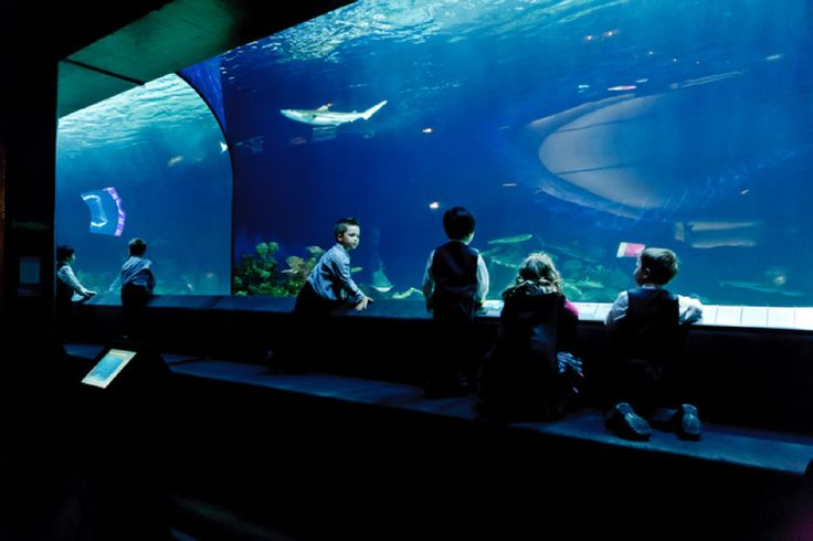 Things to do in Vancouver: Tourist Attractions  #ThingsToDo #Vancouver #Tourist #Attractions #Fun #Friends #Love #Romance #ConquerRoutine #chillwall chillwall.com