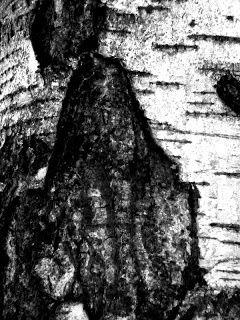 Satu Ylävaaran grafiikkaa & taidetta: Vanha tietäjä