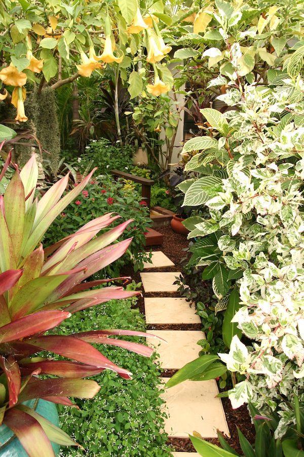 Temperate climate tropical garden | GardenDrum Tropical Breeze design Helen…