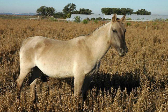 Reserva Natural do Cavalo do Sorraia (Alpiarça) - Distrito de Santarém | Guia da Cidade | Região de Lisboa - Portugal