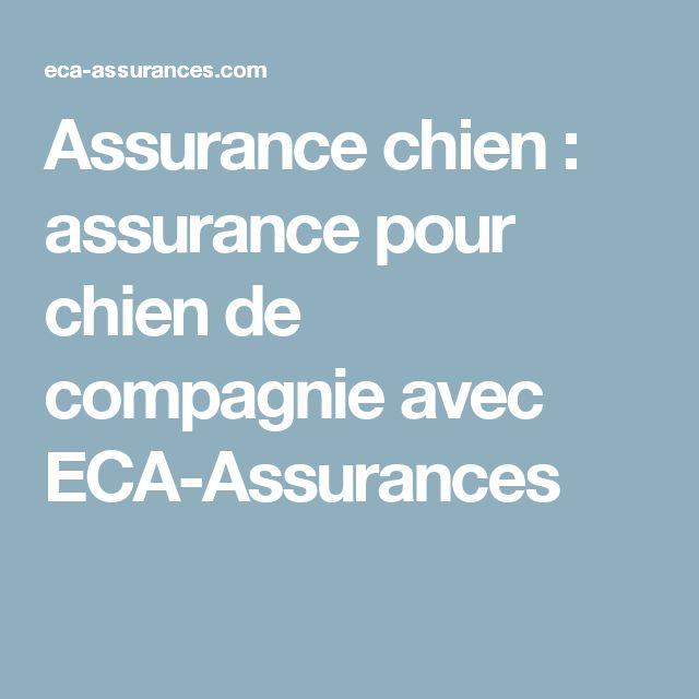Assurance chien : assurance pour chien de compagnie avec ECA-Assurances