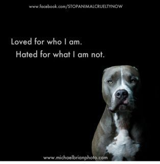 "This is extremely important because not all ""Pit Bulls"" are dangerous.  It has been proven in numerous studies and tests that the American Staffordshire Terrier, as they are specifically categorized as, has a better temperament than a Golden Retriever with children and other pets.  This petition is..."