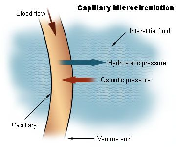 Capillary Dynamics game. In this learning object, learners examine the movement of fluid within the vascular system. A short quiz completes the activity. Wisc-Online