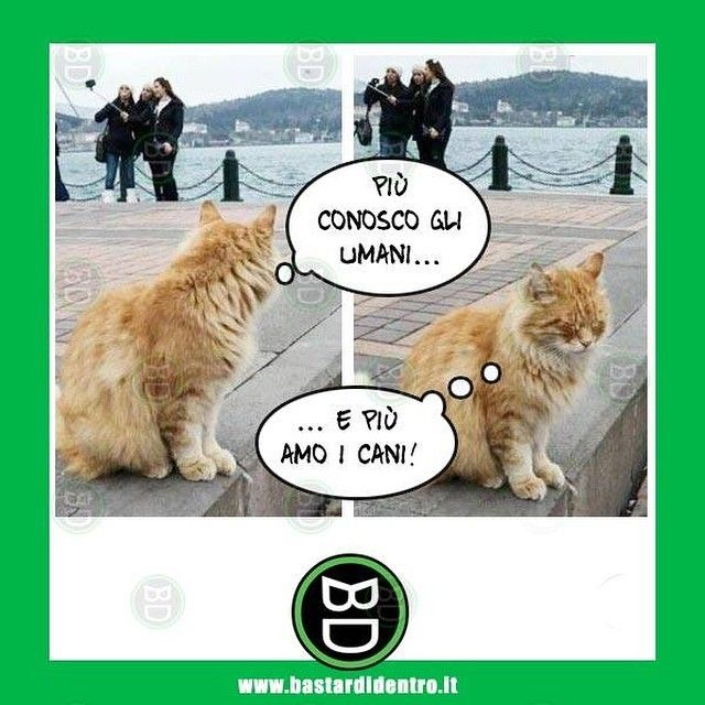 #bastardidentro #selfie #gatto www.bastardidentro.it