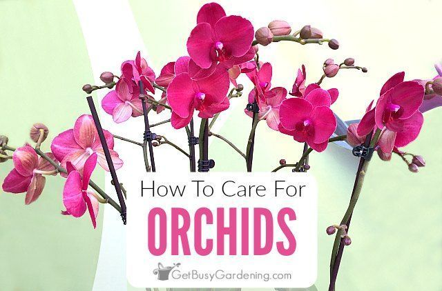 How To Care For An Orchid Plant Care Orchid Plant In 2020