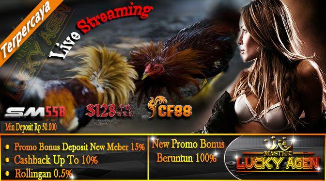 S128 Adu Ayam | Kelebihan Ayam Aduan Pama Rambong Asli