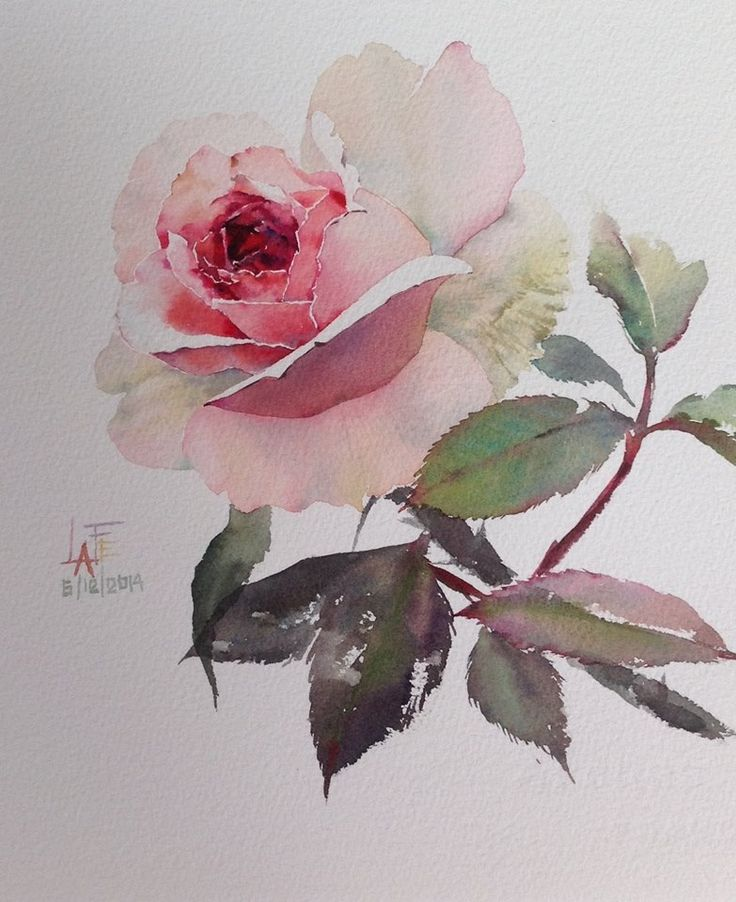 8482 best art flowers images on pinterest flowers for How to paint a rose watercolor