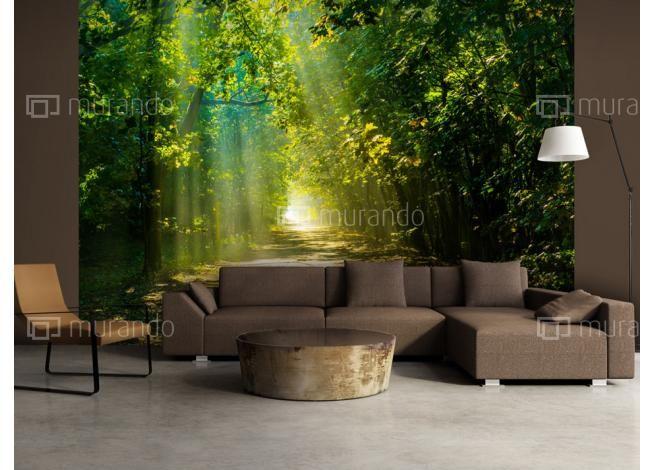 Sluneční svit lesa